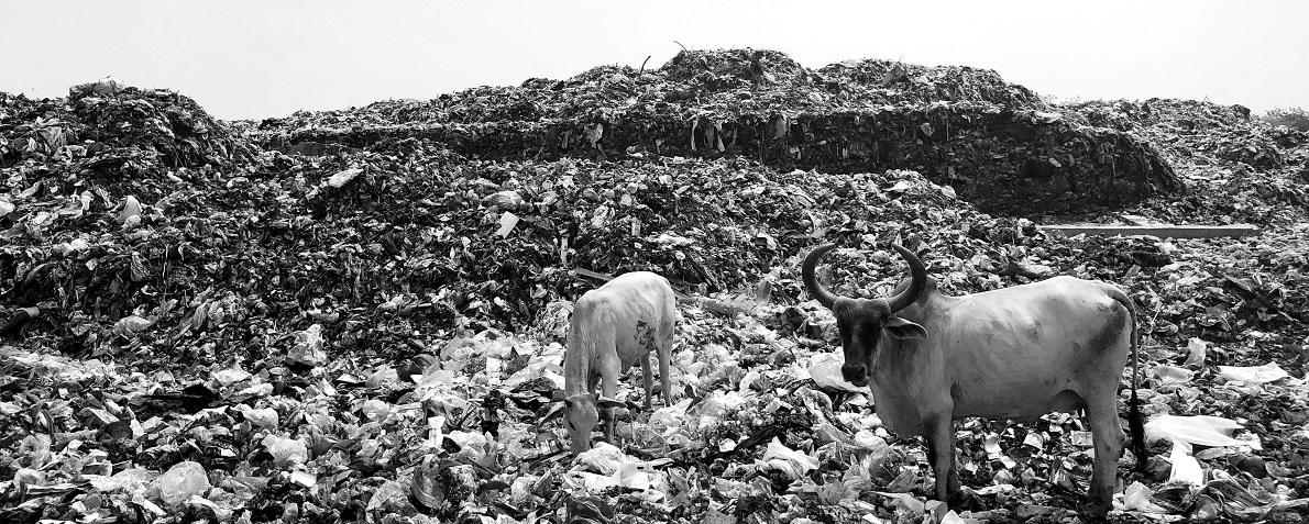 Pandemia, crisi ecologica Stefano Ciafani